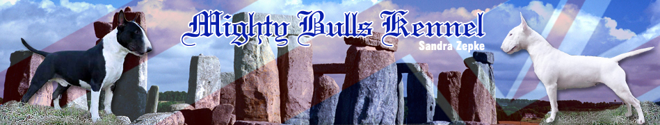 MIGHTY BULLS, Bull Terrier Kennel